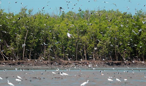 Taman Nasional Sembilang (www.southsumatratourism.com)